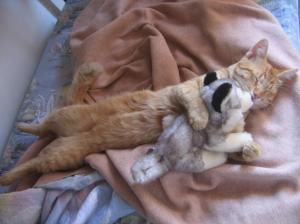 pisoi adormit